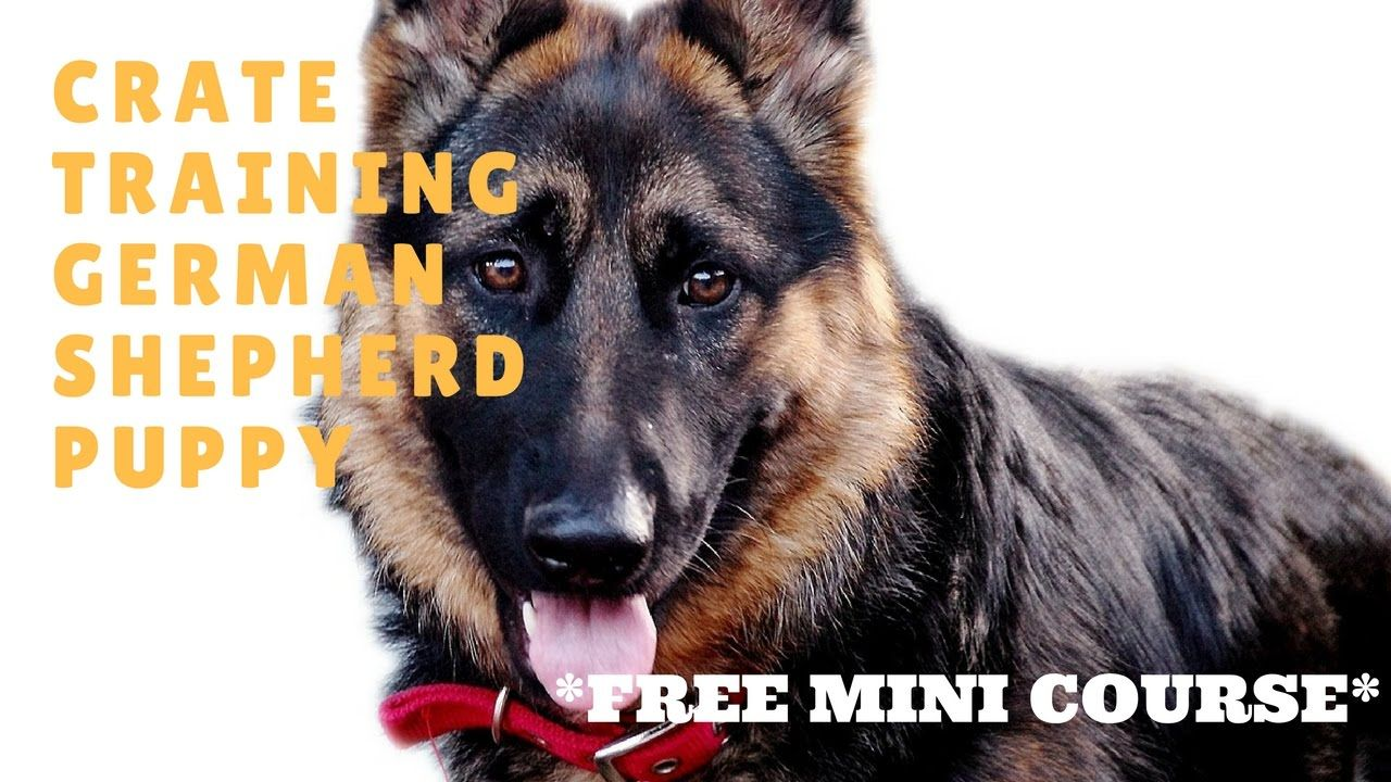 Crate Training German Shepherd Puppy Free Mini Course Puppy