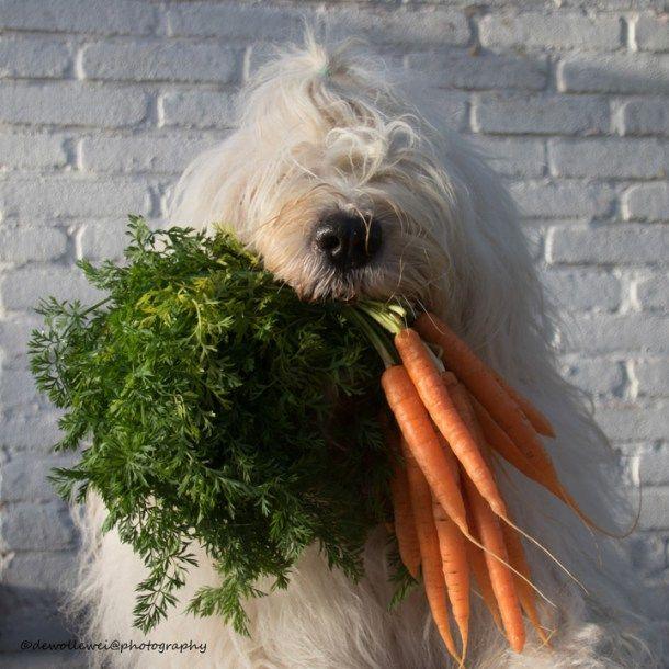 pet photography, nature photography, dog images, dog photos, pet photography tips, pet photography ideas