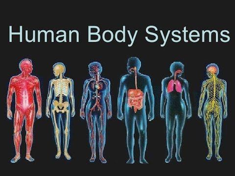 Human Body Systems Youtube Human Body Systems Body Systems Human Body