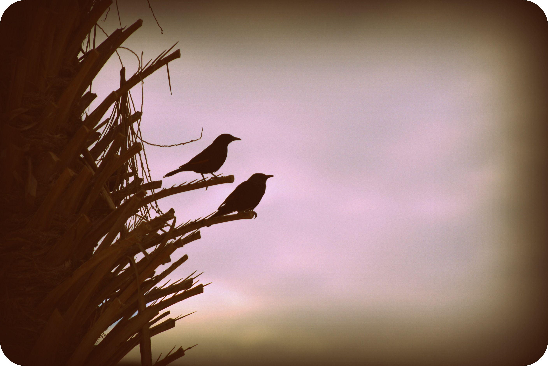 birds in Israel, taken by LaurenDiNovi
