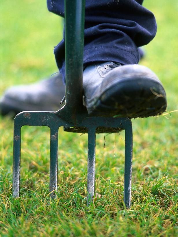 Essential Gardening Tools : Outdoors : Home & Garden Television