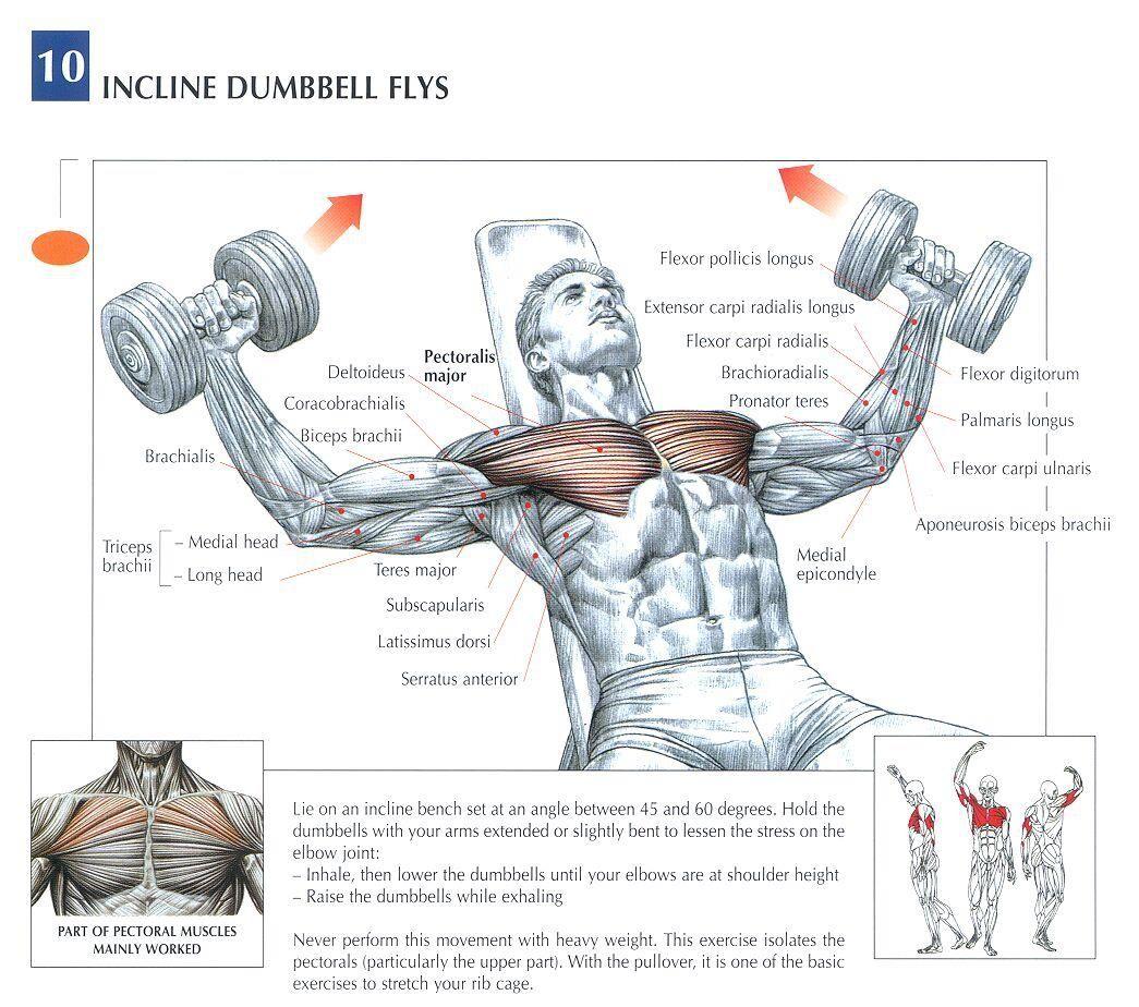 Dumbbell Chest Workouts For Men: Incline Dumbbell Flys