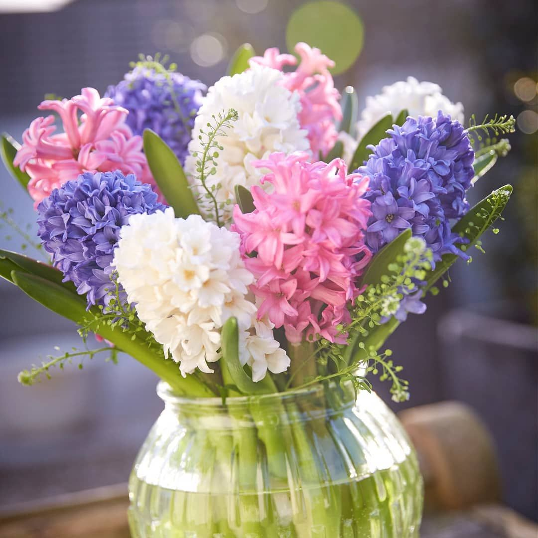 This arrangement is full of the joys of spring where would you this arrangement is full of the joys of spring where would you display these hyacinths in your home springflowers blooms floraldesign interflora mightylinksfo