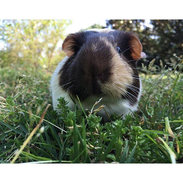 Small Pet Advice Kids And Small Pets Petsmart Best Small Pets Small Pets For Kids Small Pets
