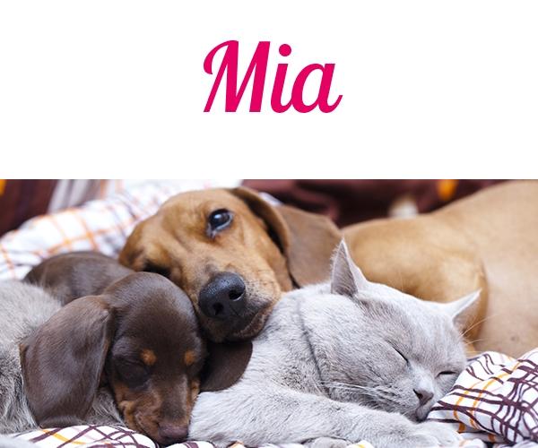 Die schönsten Namen für Haustiere Katzen namen
