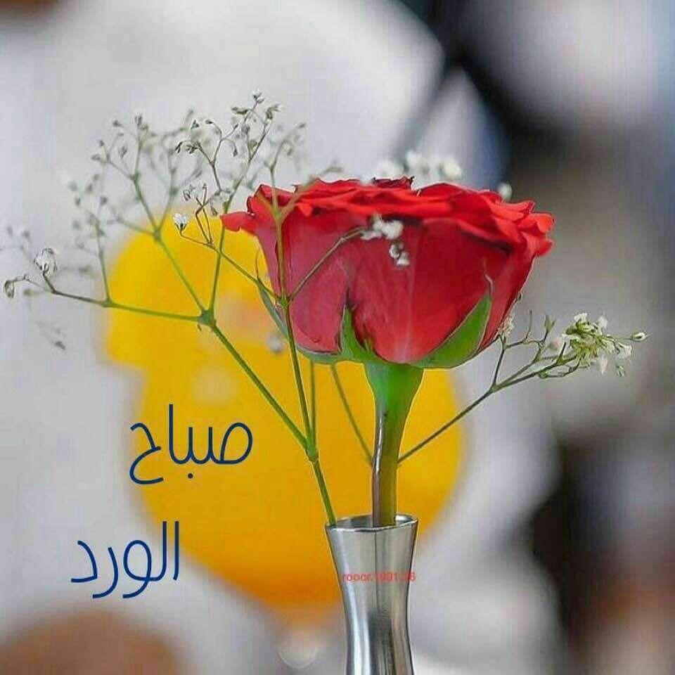 جمال الصبح ليس في شروق الشمس فقط بل في شكر الل ه على أن وهبنا يوما جميلا آخر في هذه ا Good Night Flowers Good Morning Arabic Good Morning Good Night