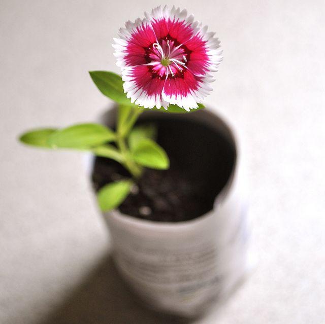 Diy Biodegradable Pots: Paper Pots By Flowerpress, Via Flickr