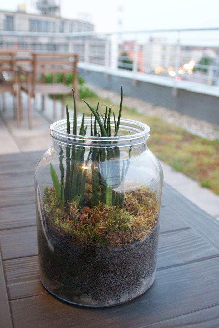 Tuto déco  le terrarium fait maison - le style sous-bois Plantes - tour a bois fait maison