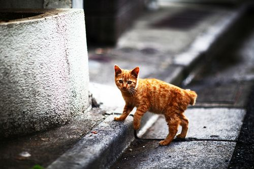 Cute kitty ♥ #animals #cats #cat