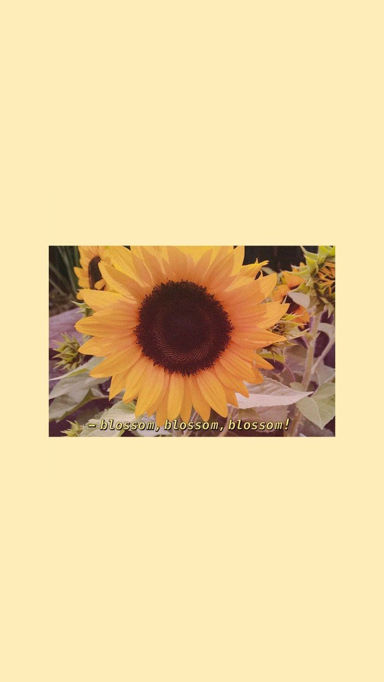 Pin By Arnnette On Wallpapers Sunflower Wallpaper Yellow