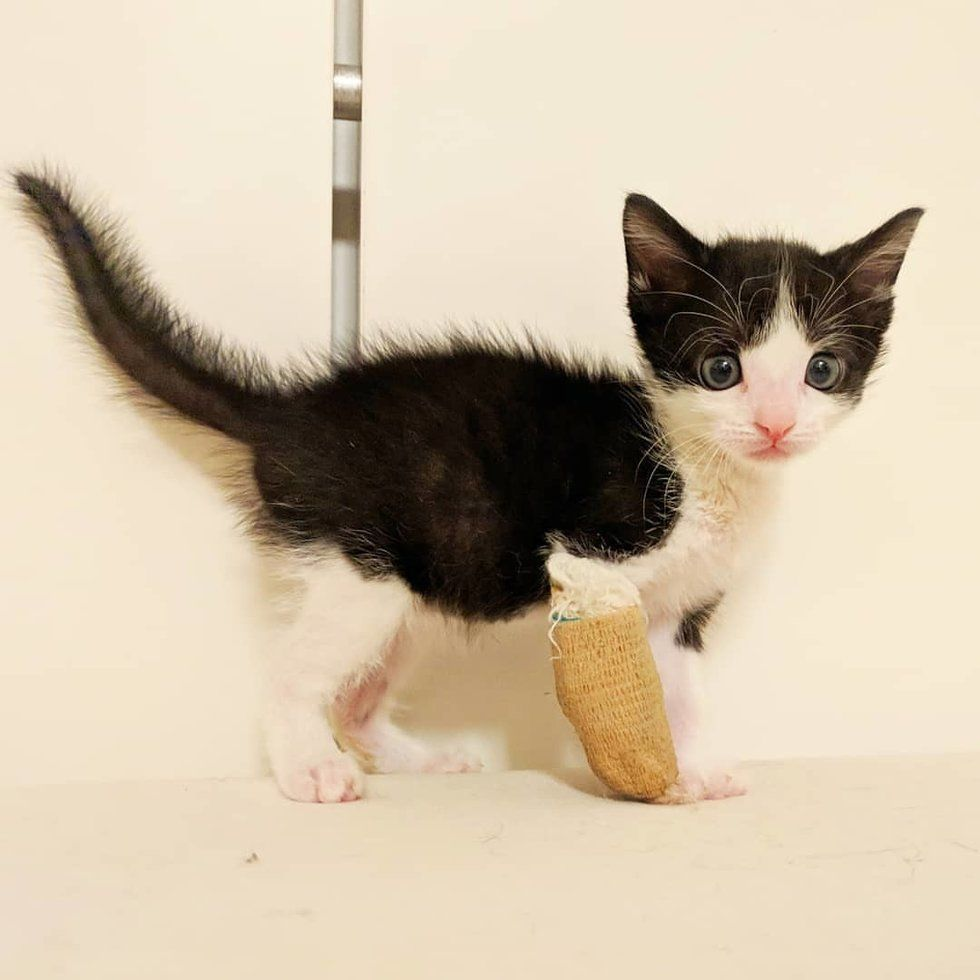 Tiny Kitten With Broken Leg Proves That He Will Heal Up And Walk Again Broken Leg Kittens And Puppies Tiny Kitten