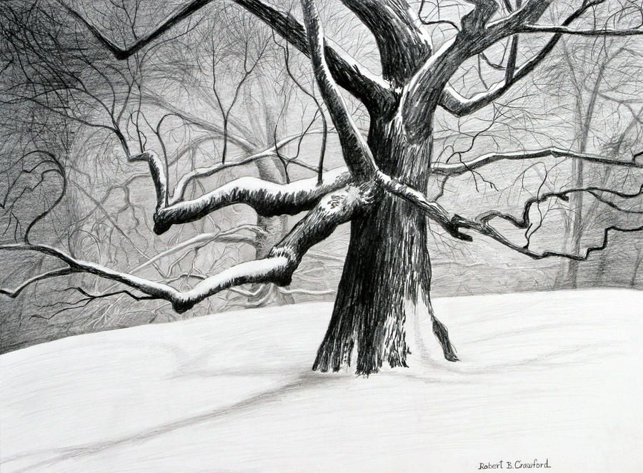 the old tree drawing the old tree fine art print