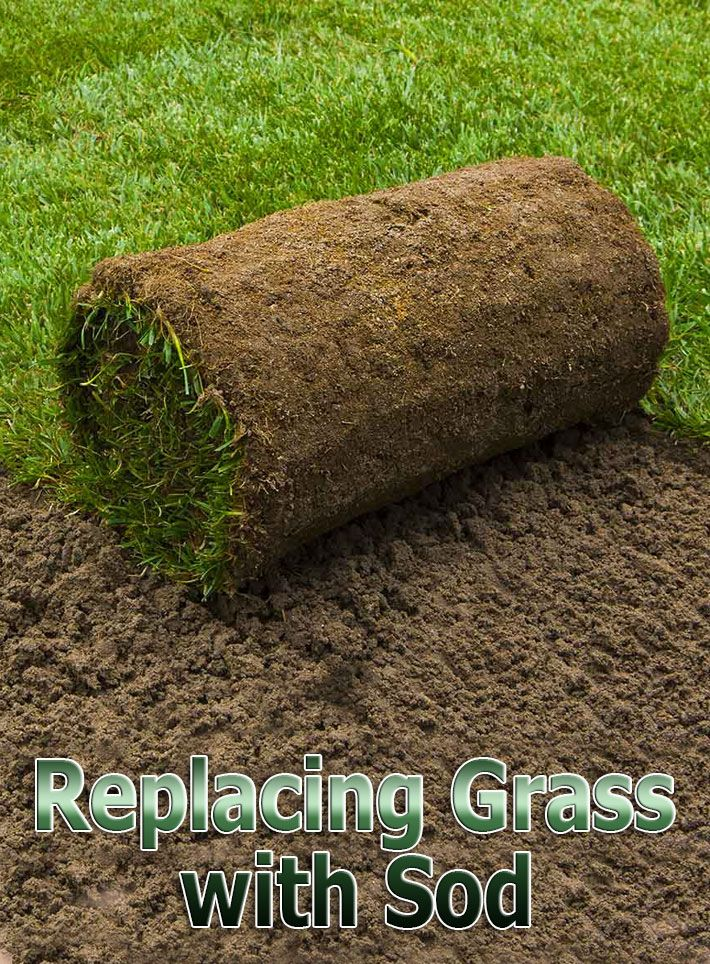 If You Are Trying To Rehabilitate A Lawn That Is Anything
