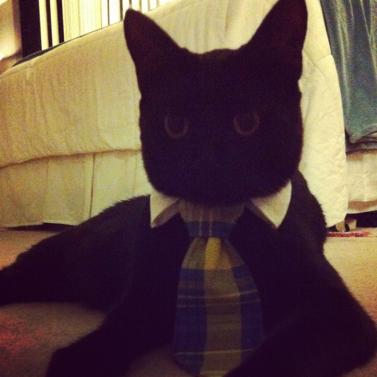 Sewed my kitty a tie for halloween he is going as business cat
