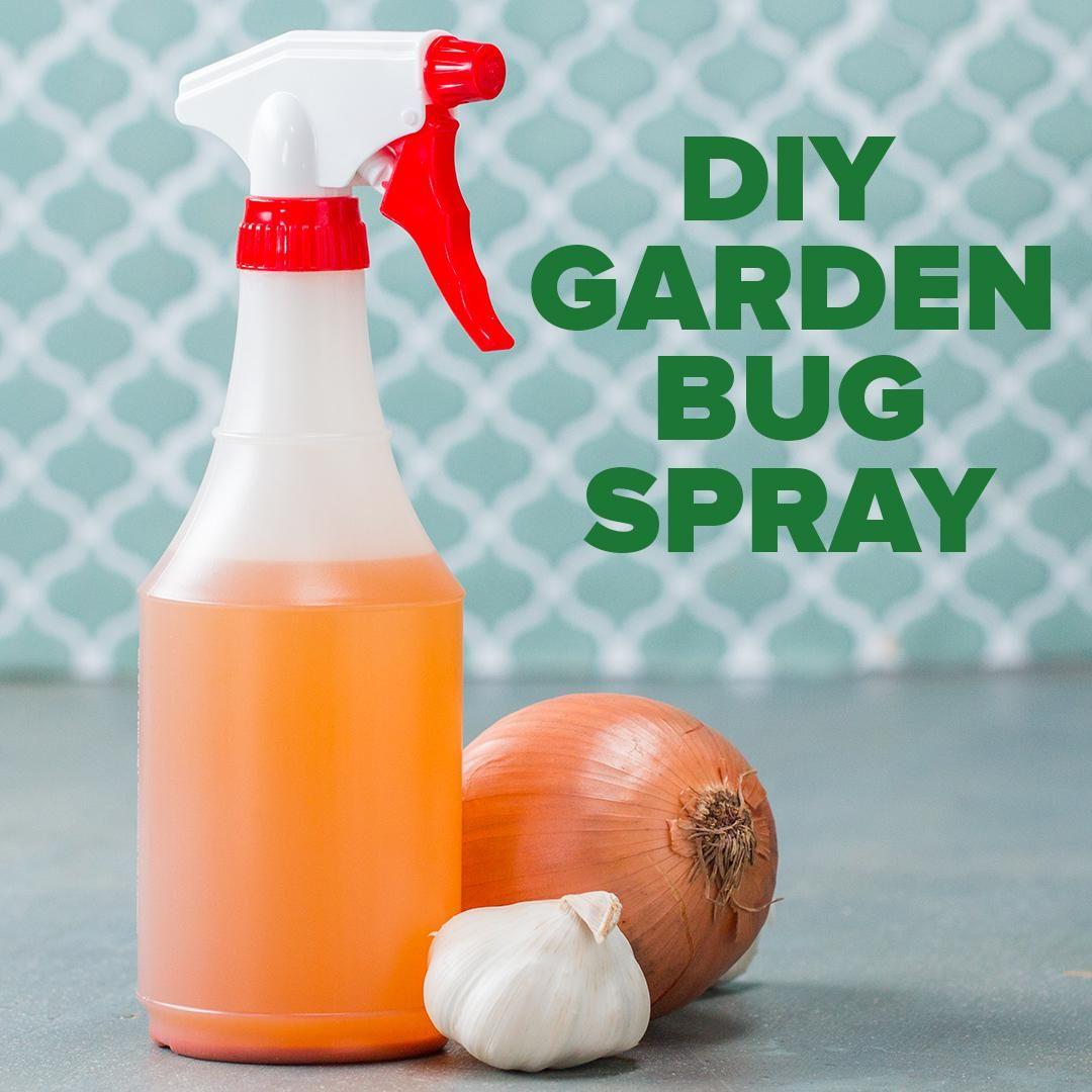 Diy garden bug spray garden bug spray