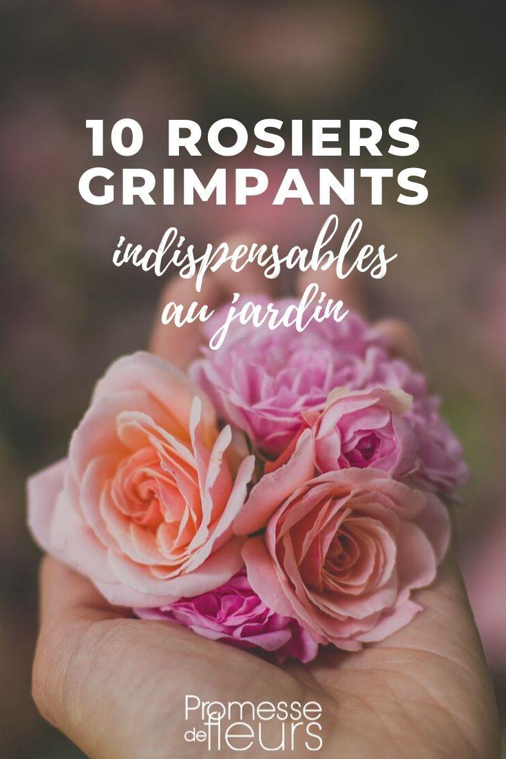 Faire Un Rosier Avec Une Rose rosiers grimpants : les 10 meilleures variétés | rosier