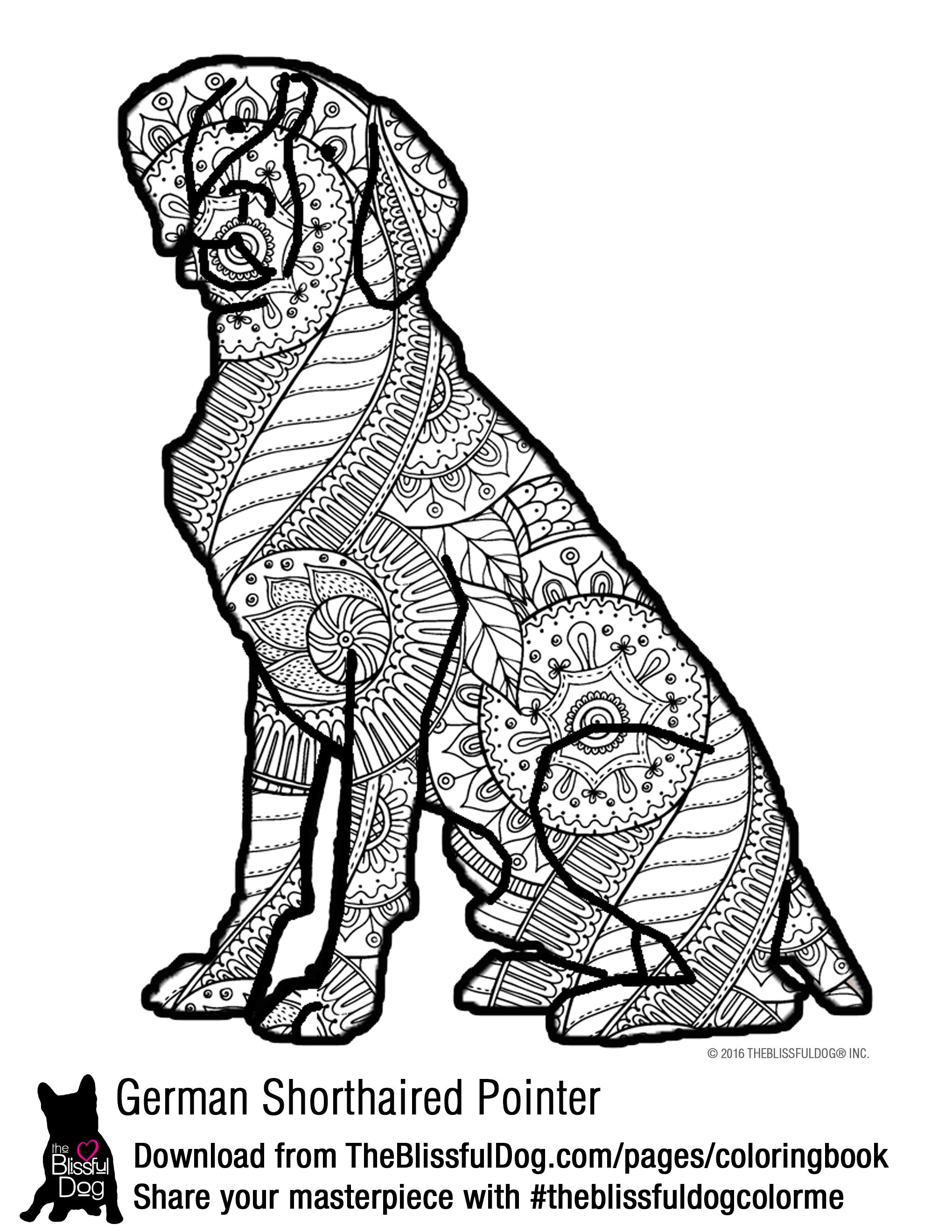 COLORING BOOK German shorthaired pointer Pointers and Dog