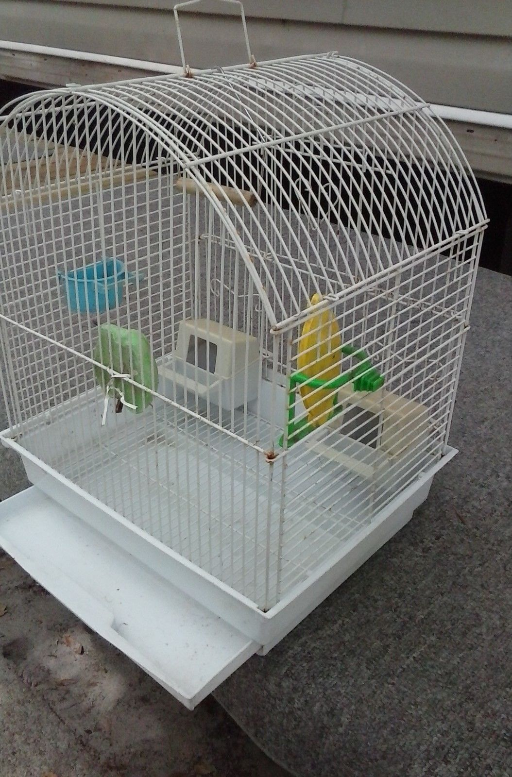 Bird Cages Used   Bird home   Pinterest   Bird cages and Birds
