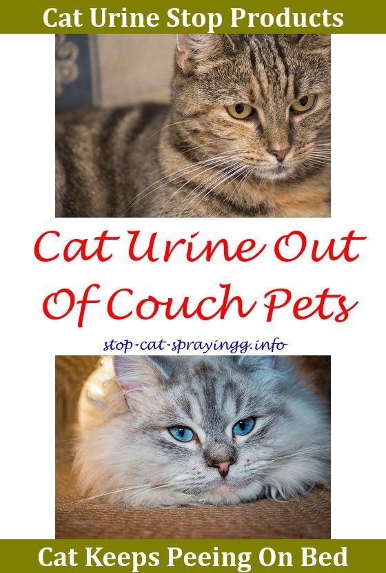 Cat Peeing Kittens Best Way To Clean Cat Spray,cat urine remover shoes.Cat