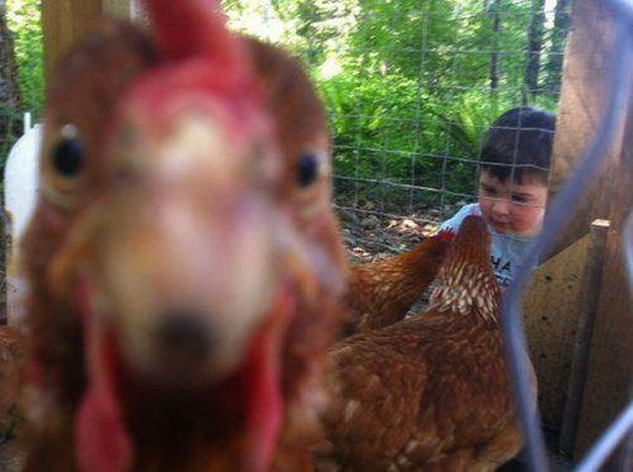 Best Animal Photobombs Funny Animal Photobombs Pics - 35 hilarious animal photobombs ever