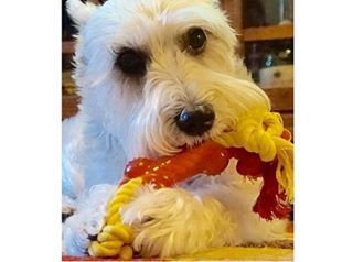 Mary Kate Pets On Instagram Mary Kate Pets Re Launches Dog Dental Chew Toy For Small Dogs On Amazon Dog Dental Chews Dog Dental Small Dogs