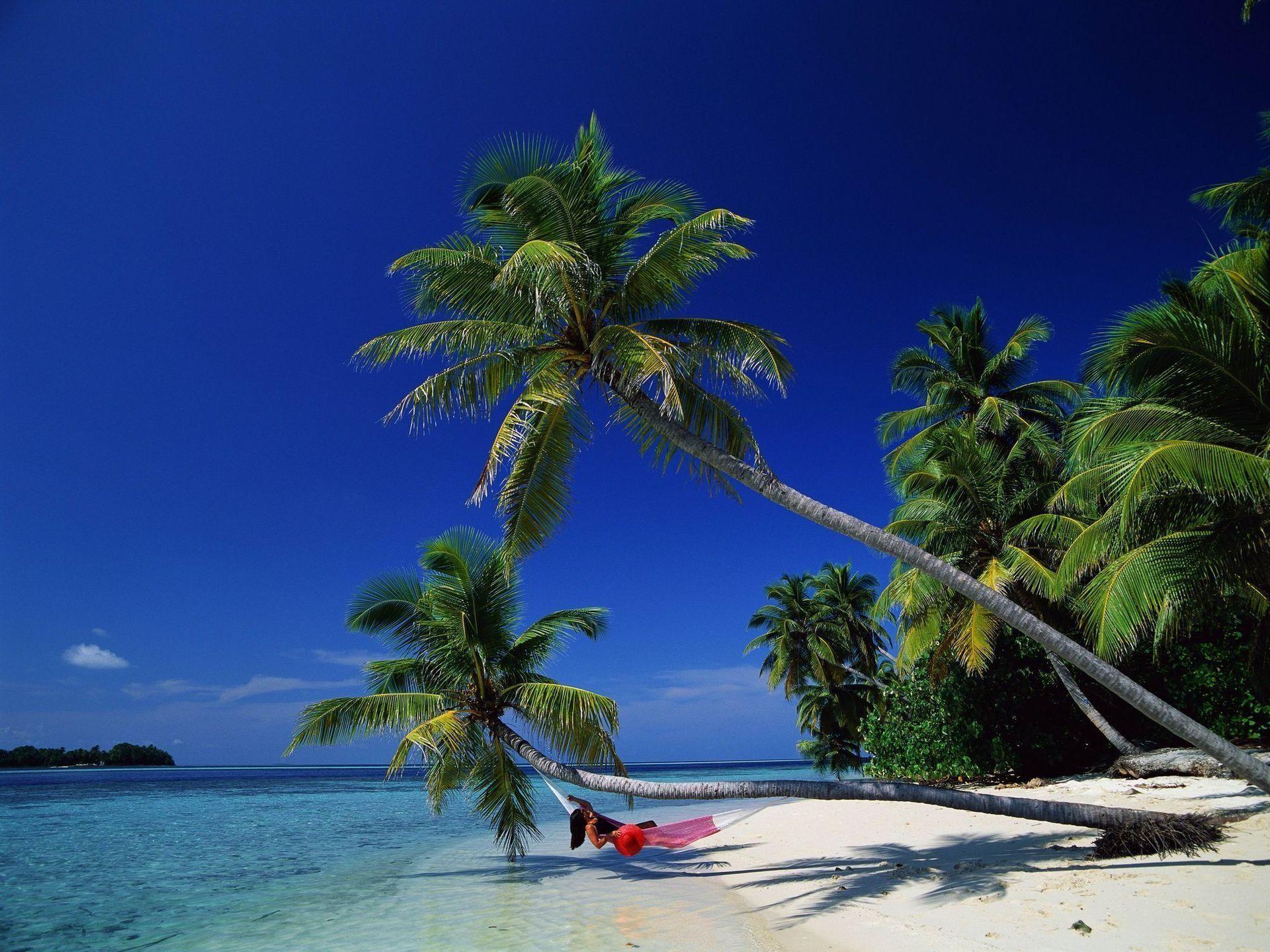 Paradise Hammock On A Tropical Island Beach With Palm Trees In Tahiti Beach Wallpaper Beach Hammock Tropical Island Beach Tropical island beach palm sea sand
