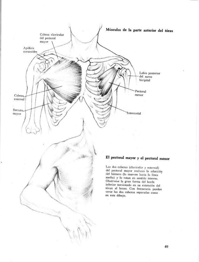Fantástico Anatomía Humana Dibujo Friso - Anatomía de Las ...