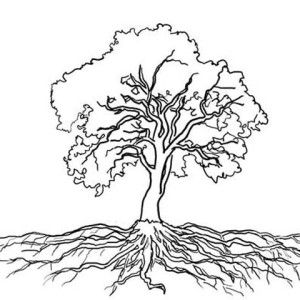 Oak Tree Massive Roots Oak Tree With Roots Drawing Tree With