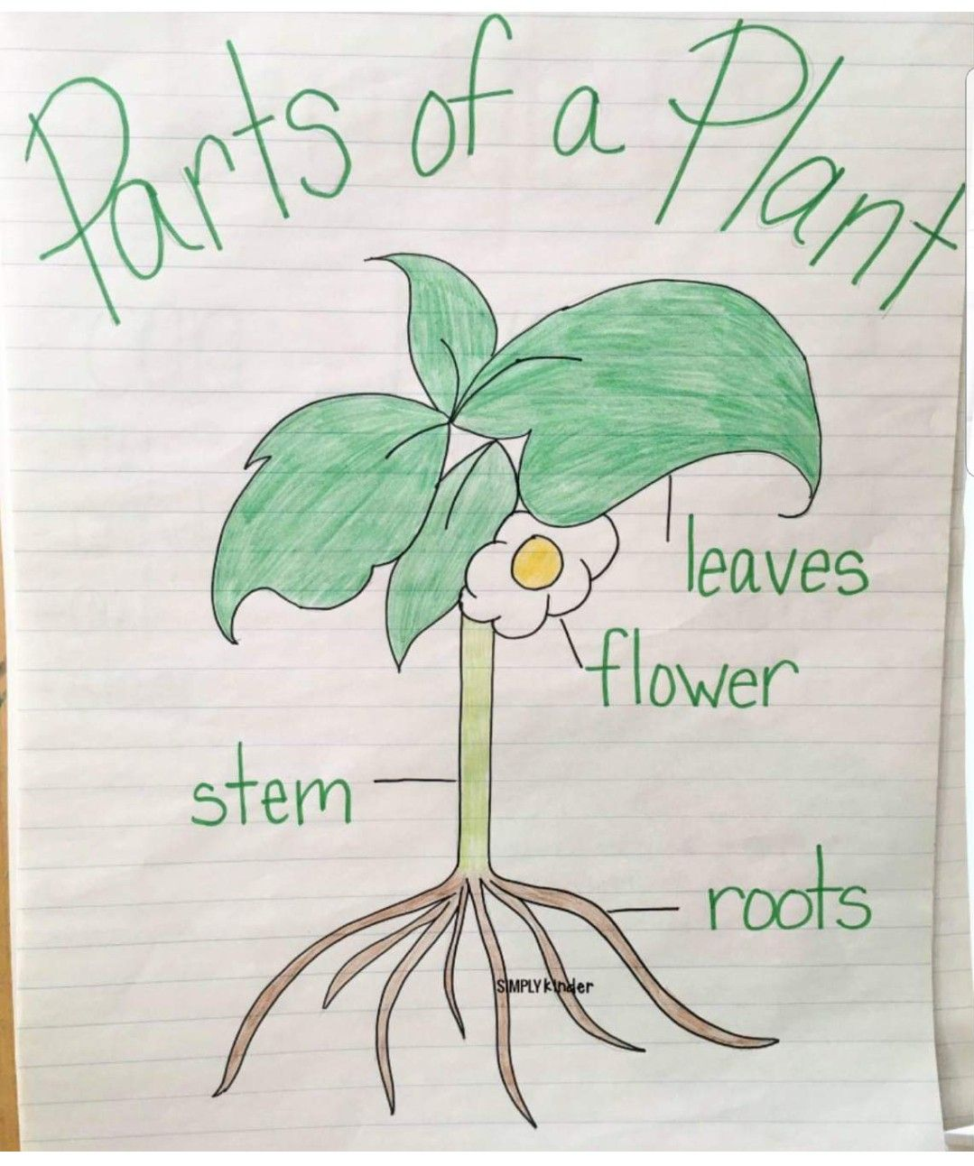 Teach Parts Of Plants In Spring