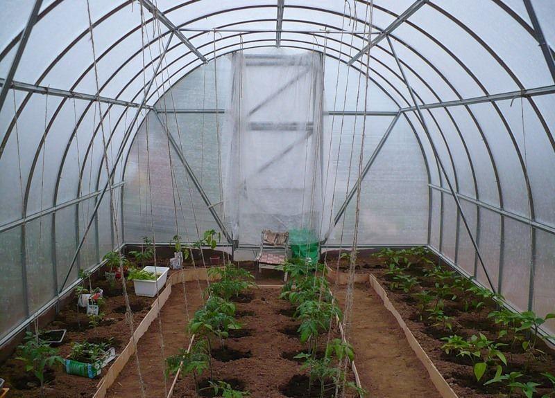 как расположить овощи в теплице 3х6