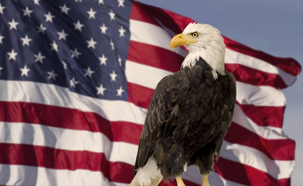 what does the bald eagle symbolize for the united states