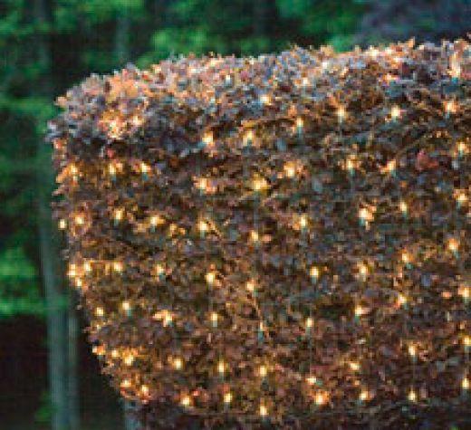 Christmas Bush Lights.Bush Christmas Lights Christmas Lights