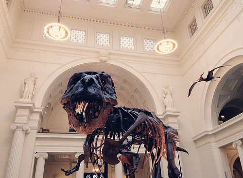 field museum by Pamplemousse Blog, via Flickr
