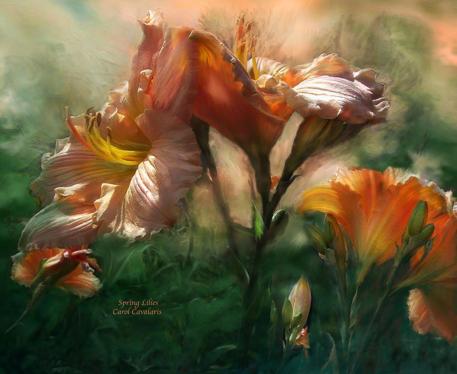 Spring Lilies by Carol Cavalaris ~ light peach