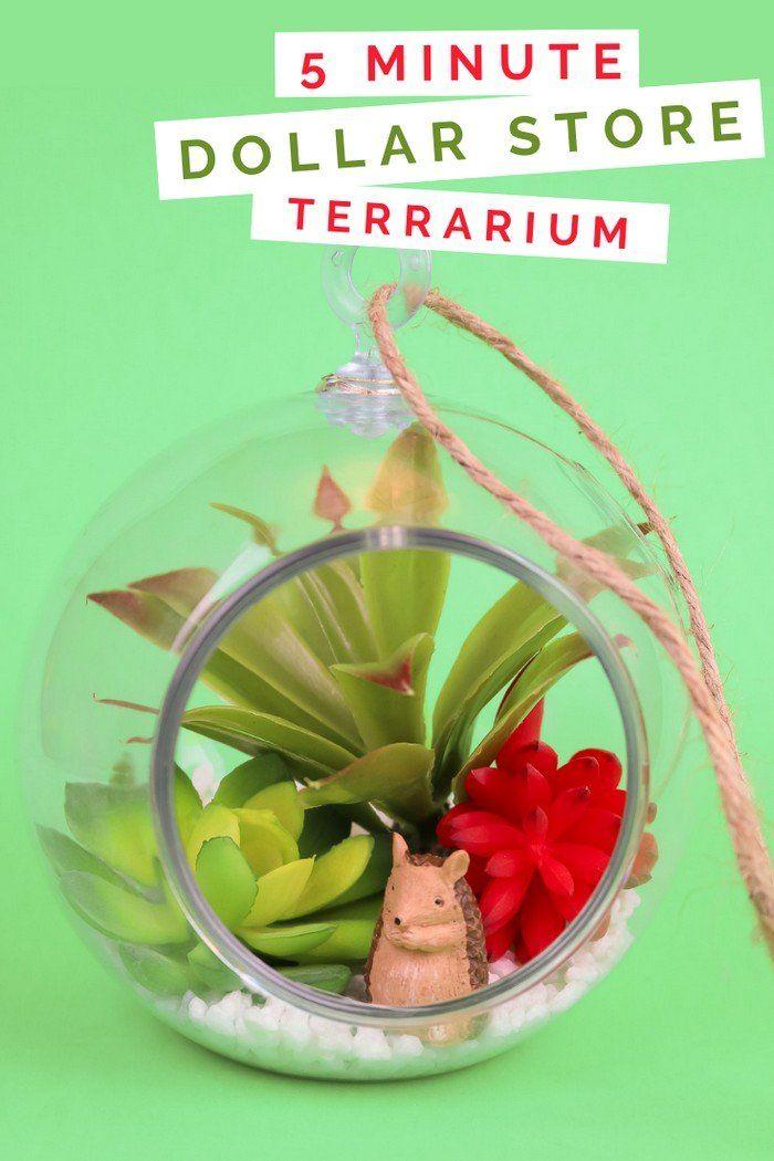 5 MINUTE DOLLAR STORE SUCCULENT TERRARIUM #succulentterrarium