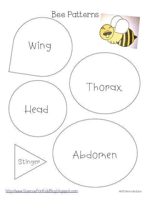 Science for Kids: Honey bees: Use bubble wrap for wings