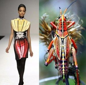 INSECT-INSPIRED CLOTHING!  MULTIPLE insects featured!