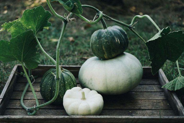 11 pflegeleichte Gemüsesorten, die auch Anfängern gelingen ...