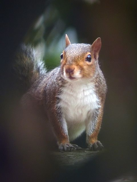 Squirrel. Photo: Andrew R. Mills