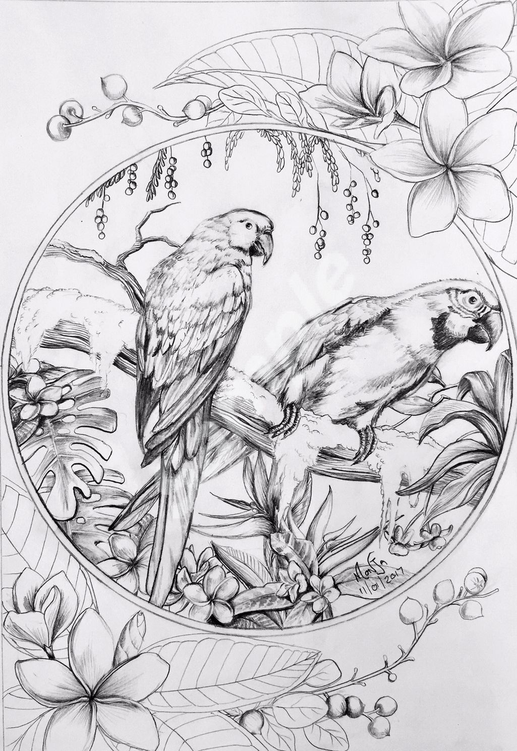 Colour My Dreams Coloring Book Parrots Artist Monja Mitchell Gates Bird Drawings Bird Coloring Pages Coloring Books
