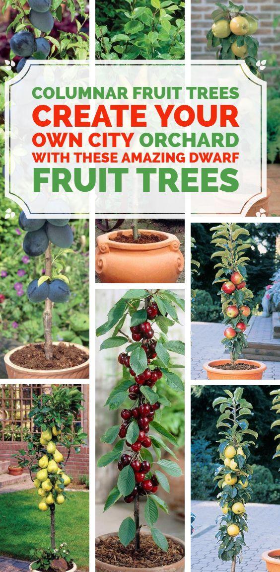 fd528cfb8df15f781fe9d74c9f583cf8 - Columnar Fruit Trees For Small Gardens