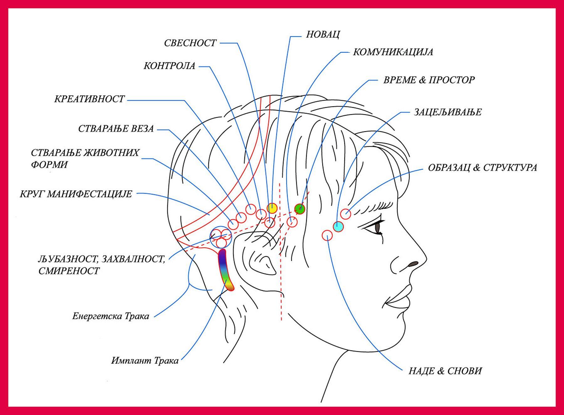 Snjezana Gottstein O Akses Bars Mariniranje Access Bars Access Consciousness Acupuncture