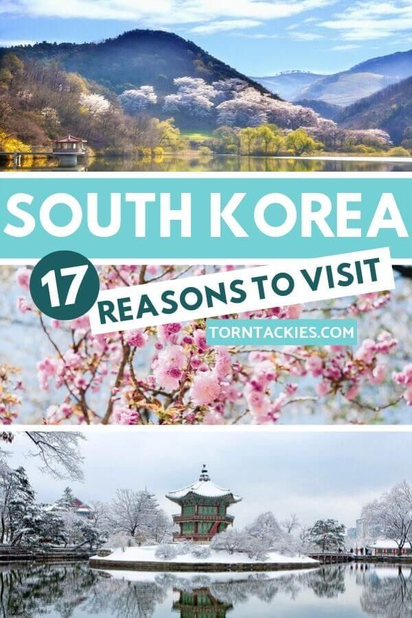 South Korea should be on your travel bucket list and here are 17 reasons why! It's one of the best destinations in Asia and with beautiful places all over the country, Korea is a bucket list destination. Travel Korea | Explore Seoul | Korea Travel Destinations | Asia Travel | Korea culture | Blog by Torn Tackies Travel | travel destinations asia south korea #seoul #korea #travel #beautifulplaces #asia #southkorea