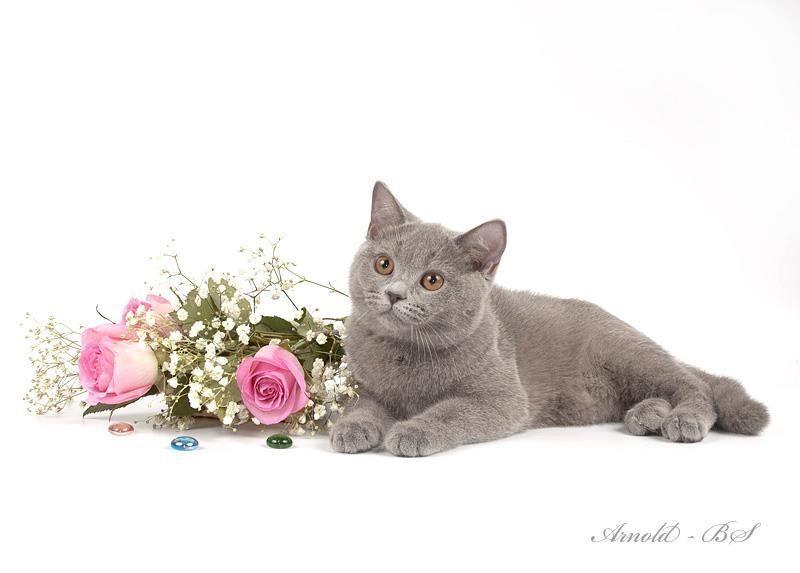 Lovely Cat & Roses