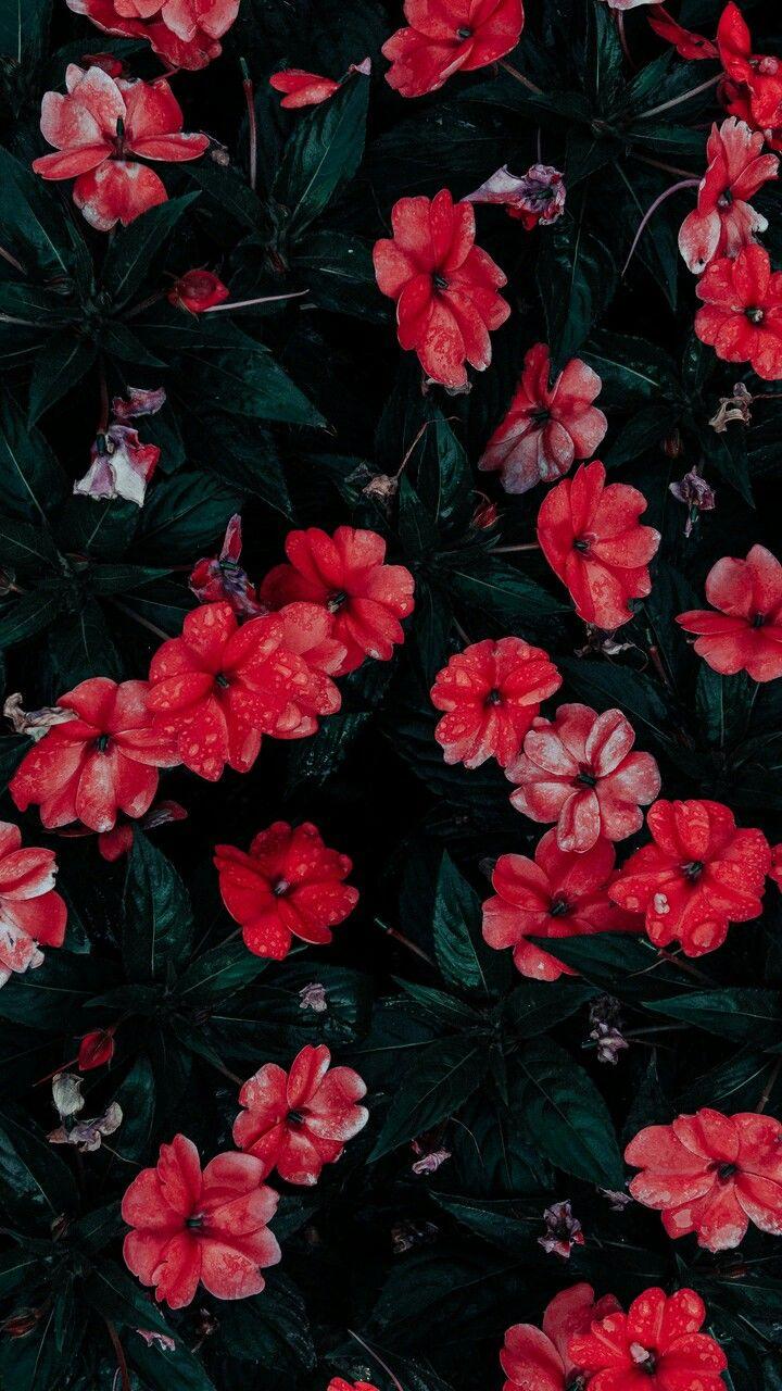 Flores F O N D O S Pinterest Fondos Fondos De Pantalla