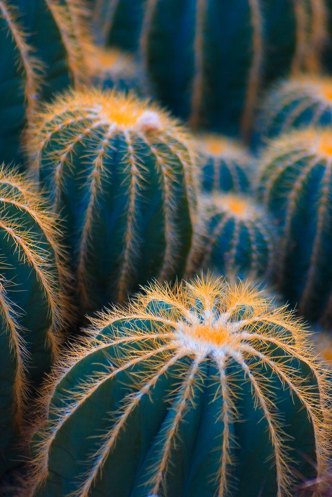 Photo of Cactus Crowd