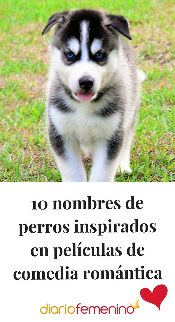 10 Nombres De Perros Inspirados En Películas De Comedia Romántica Nombres De Perros Nombres De Perro Hembra Nombres Para Perros Husky