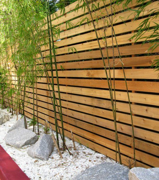 modern garden landscape privacy fence ideas wood bamboo plants