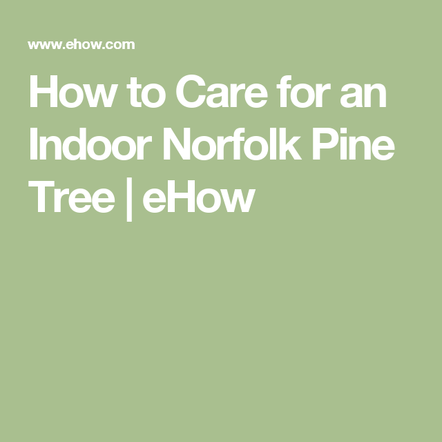 How To Care For An Indoor Norfolk Pine Tree