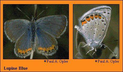 JPG -- species photo